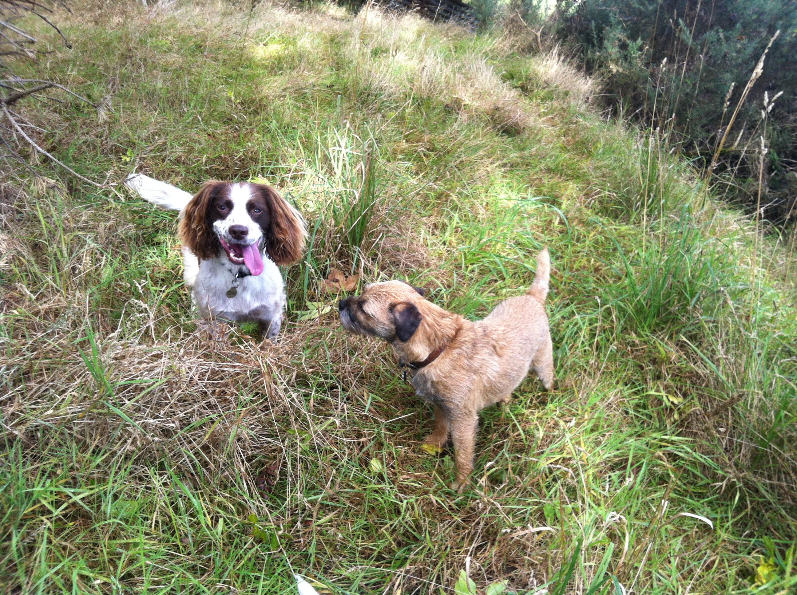 Dog Walking Services Aberdeen