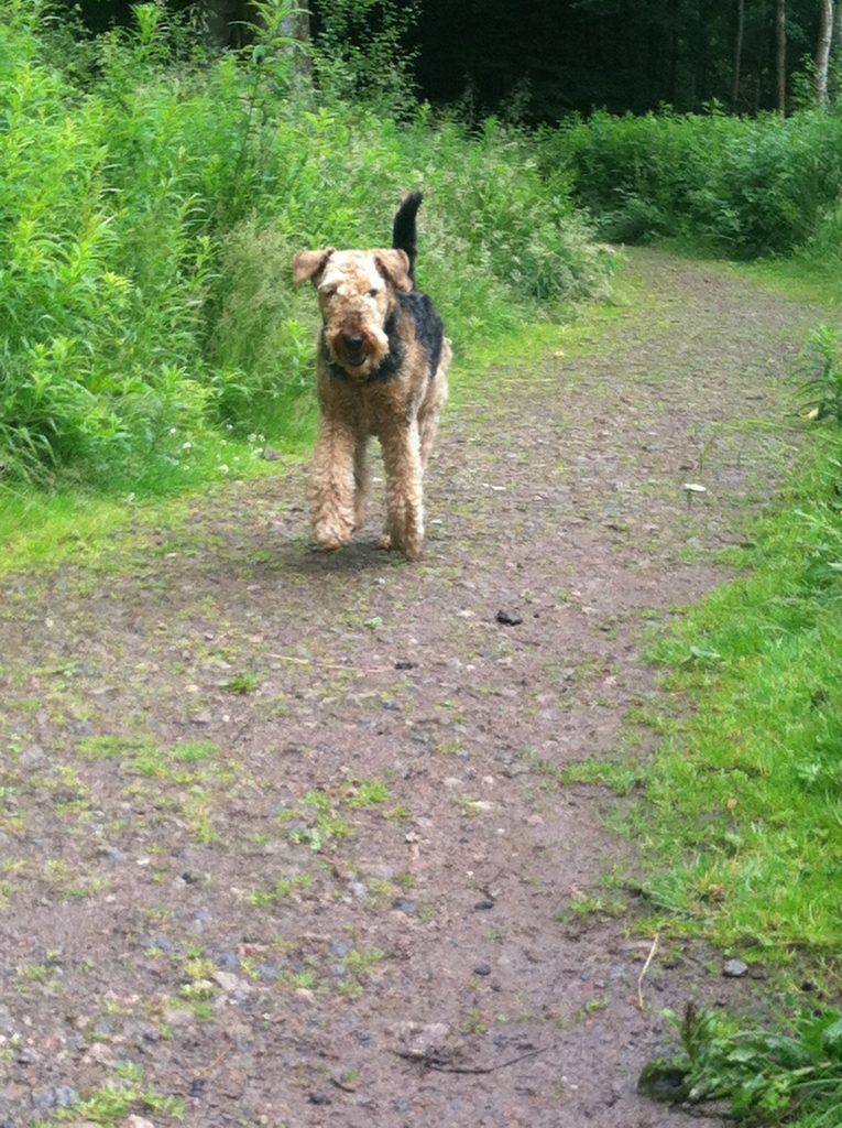 dog walking in Aberdeen